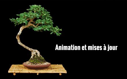 Animation et Mise à jour